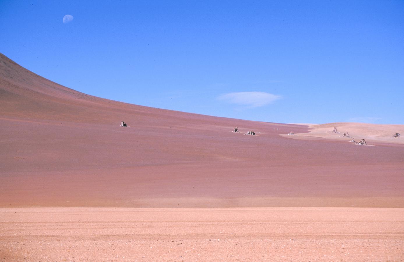 lama-glama-33-bolivia-2001