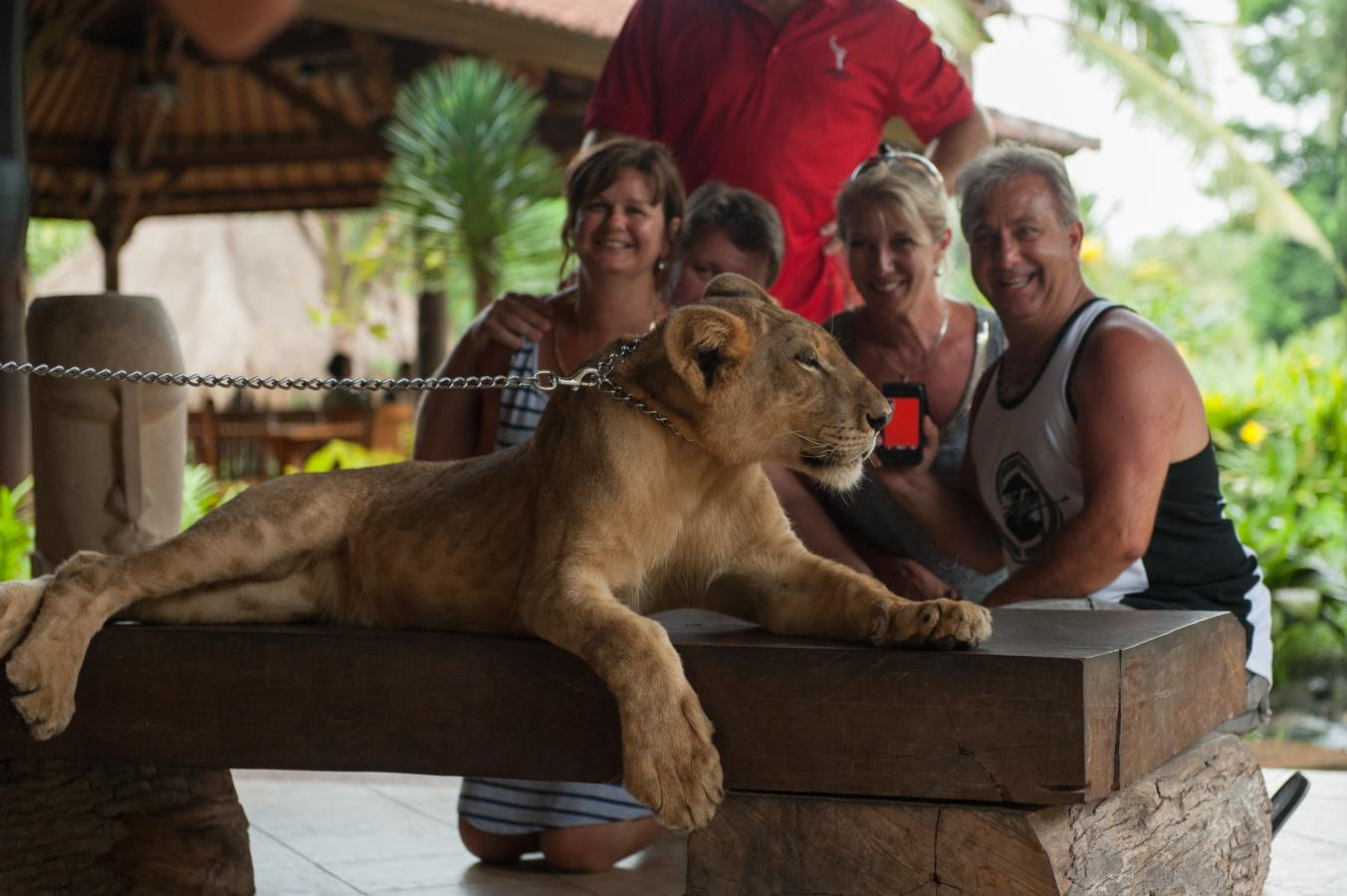 tourists-posing-with-a-young-lion-bali-zoo-singapadu-bali-2013